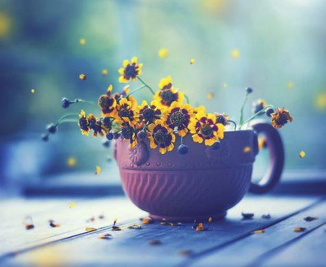 hoa đẹp làm ảnh đại diện fb