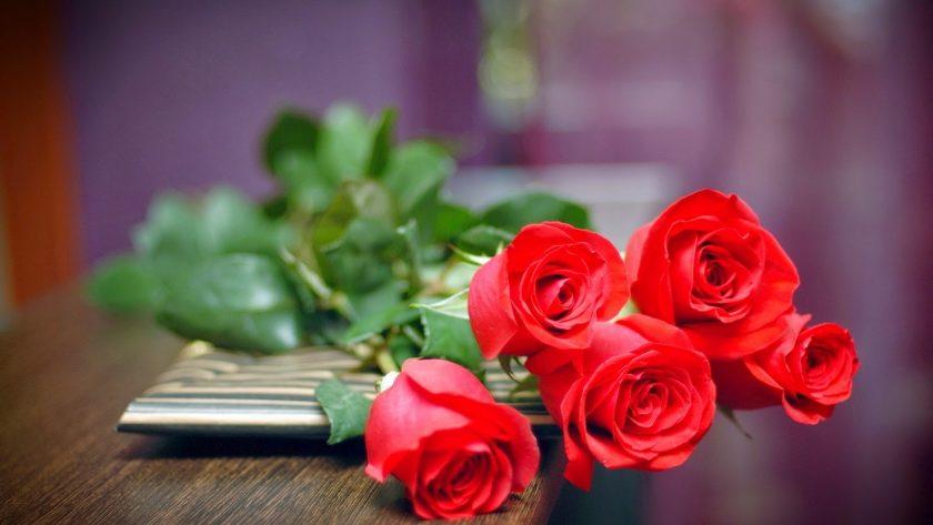 hoa valentine hoa hong tinh yeu