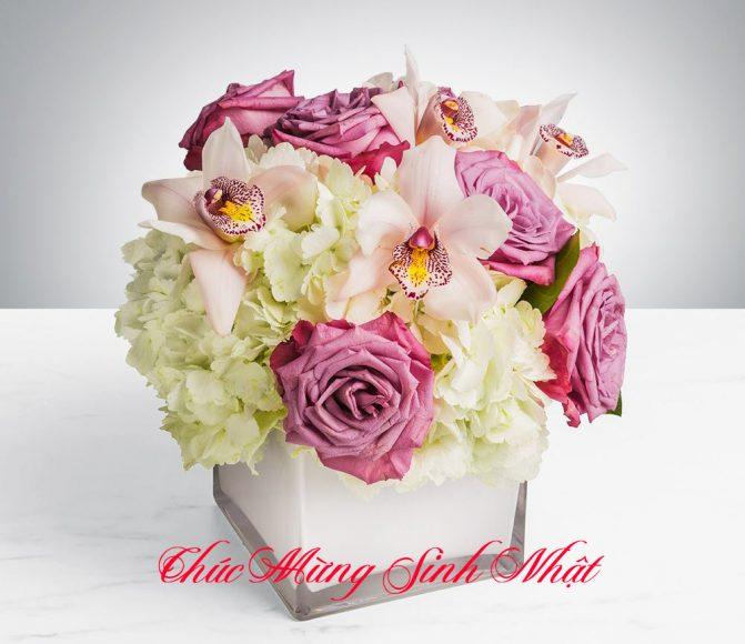 mau hoa sinh nhat sang chanh