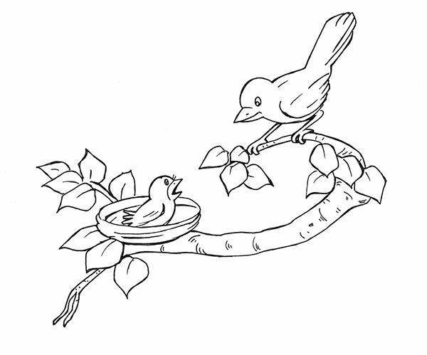 tranh chim mẹ và chim non