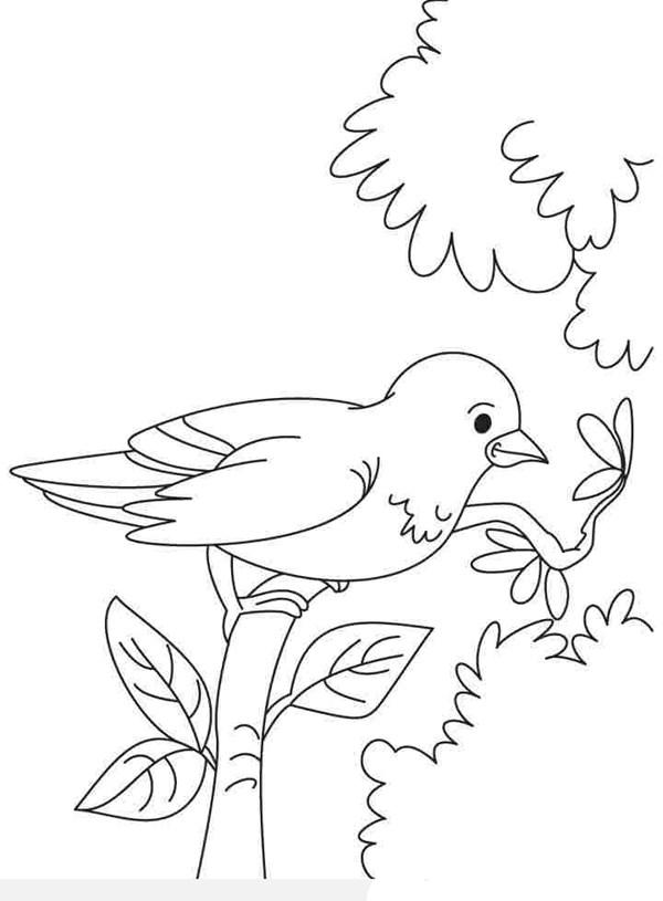 tranh tập tô con chim sâu đẹp đậu trên cành