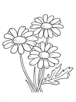 tranh to mau hoa cuc