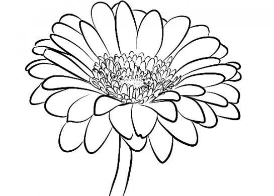tranh to mau hoa dong tien