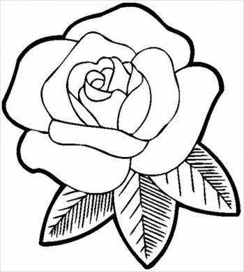 tranh to mau hoa hong