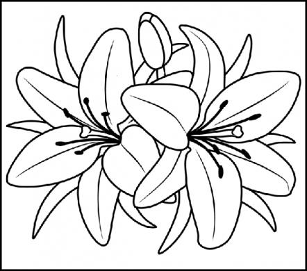tranh to mau hoa ly