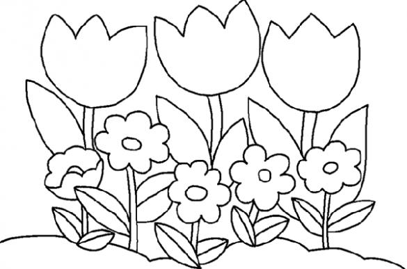 tranh to mau hoa tulip