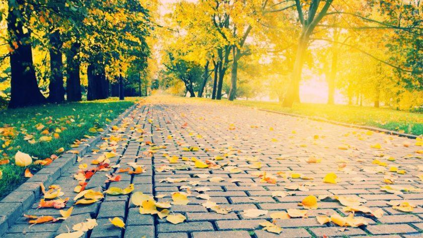 ảnh đẹp về nắng mùa thu