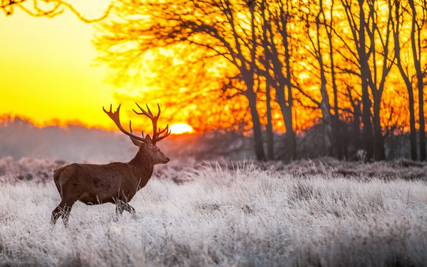 ảnh nắng mùa đông đẹp