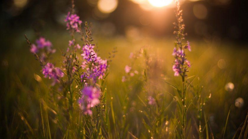 hinh anh hoa dep nhat