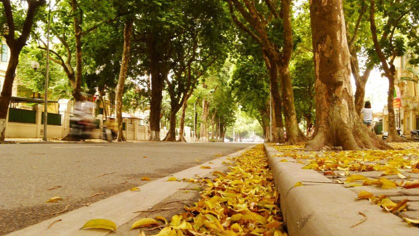hình ảnh lá mùa thu hà nội