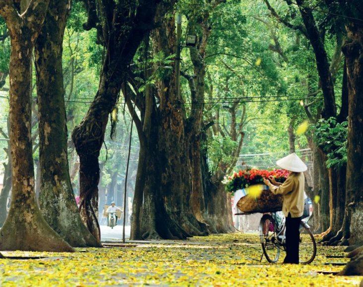 hình ảnh mùa thu hà nội