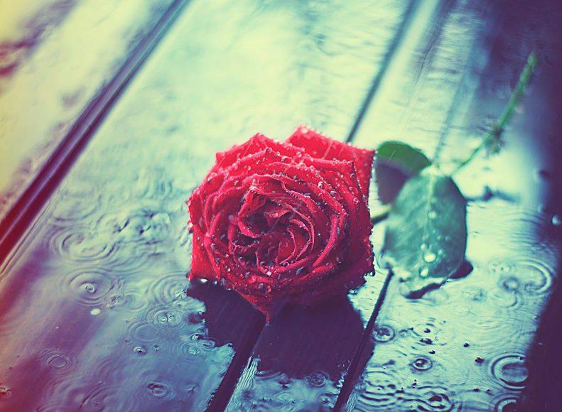 hinh anh mua va hoa hong