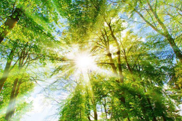 Hình ảnh nắng đẹp nhất