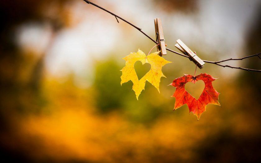 hình nền chiếc lá trái tim tình yêu mùa thu lãng mạn