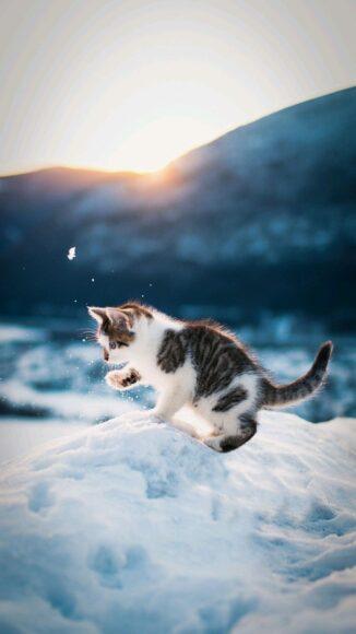 hình nền cute dễ thương mèo con nghịch tuyết