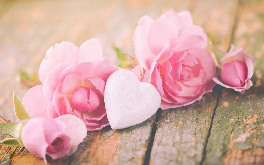 hình nền hoa hồng trái tim tình yêu cho máy tính