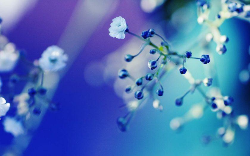 hình nền màu xanh nước biển và hoa trắng