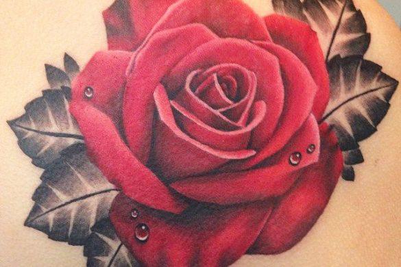 mẫu hình xăm hoa hồng đẹp