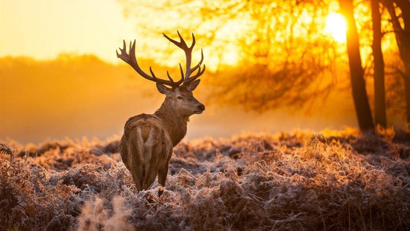 những hình ảnh đẹp về nắng mùa đông
