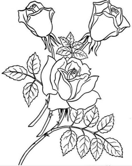 tranh tô màu bông hoa hồng cho bé 4 tuổi