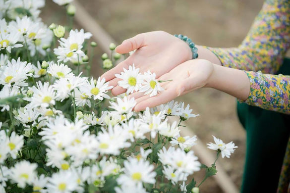 anh hoa cuc hoa mi