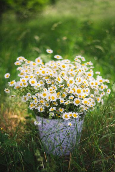 hinh nen hoa cuc hoa mi dep nhat
