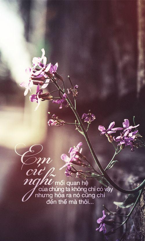 ảnh chữ buồn về tình yêu tan vỡ trước những cánh hoa màu tím