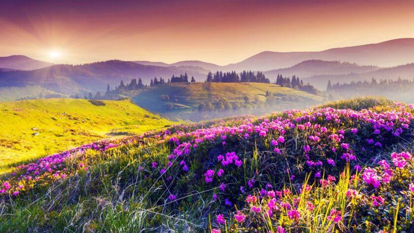 cảnh bình minh trên cánh đồng hoa cỏ