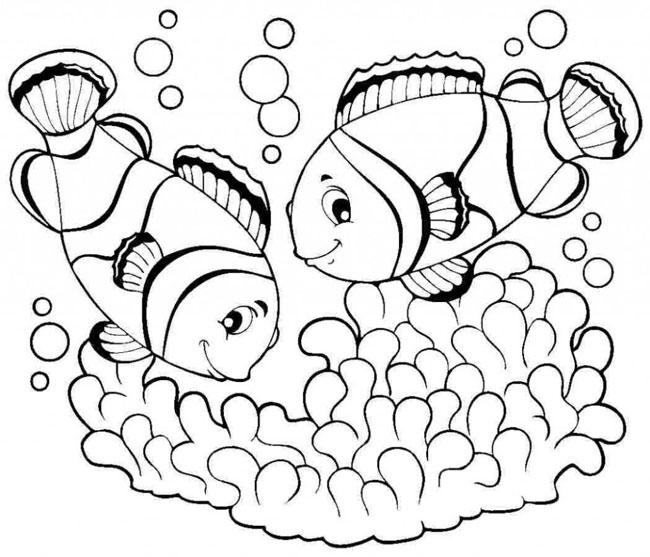 hình vẽ 2 con cá hề dưới đại dương