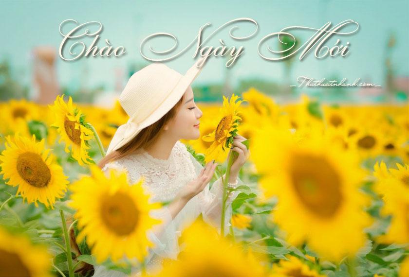 Những lời chúc, câu chúc buổi sáng hay, độc đáo cho ngày mới thêm tươi đẹp