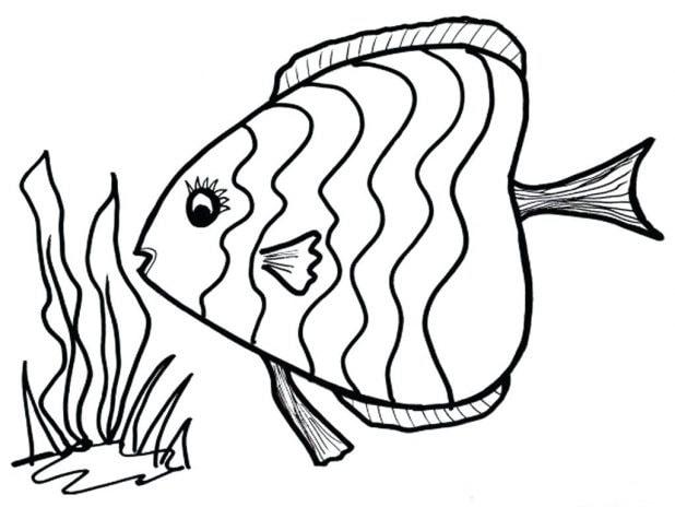 tranh con cá cho bé tập tô