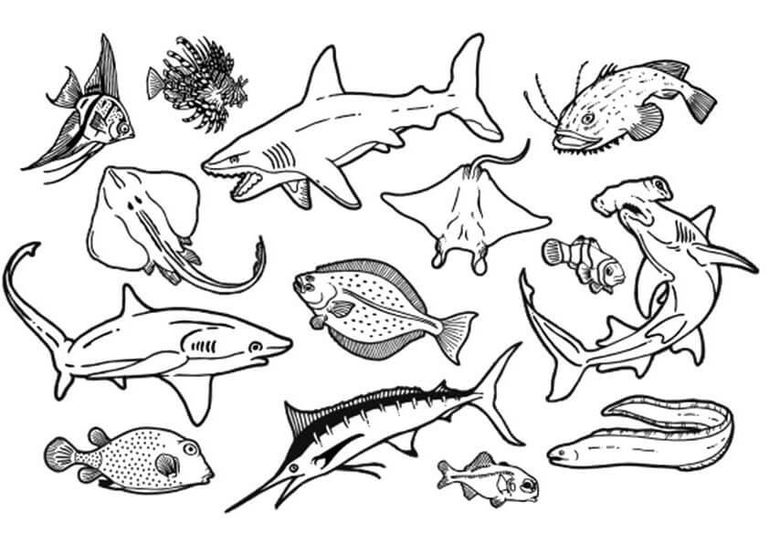 tranh tập tô các loài cá sống dưới biển cho bé