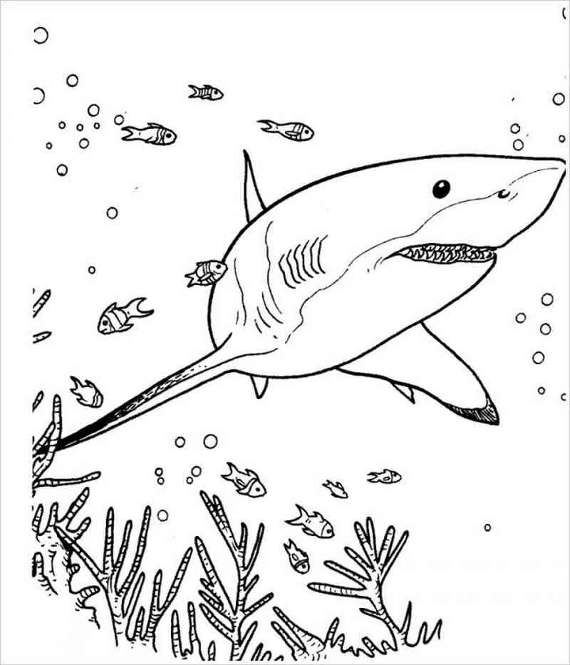 tranh vẽ cá mập dưới đại dương
