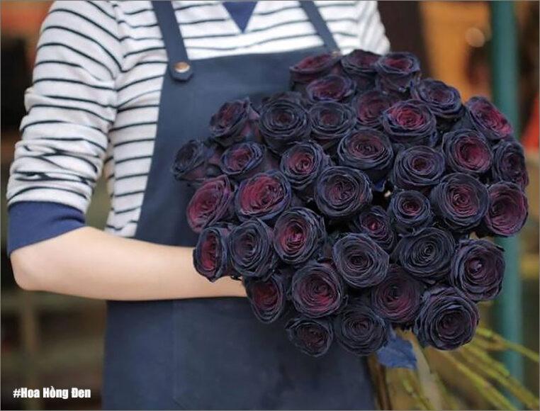 hình ảnh ý nghĩa hoa hồng đen
