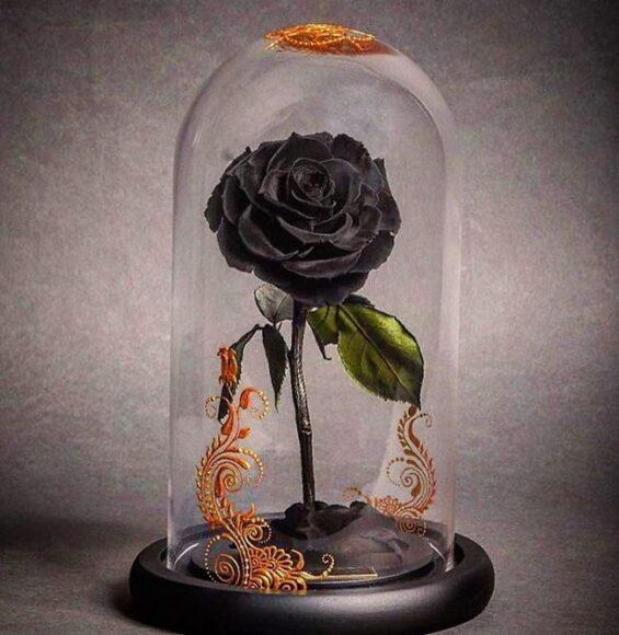 Hoa hồng đen vĩnh cửu trong lồng kính