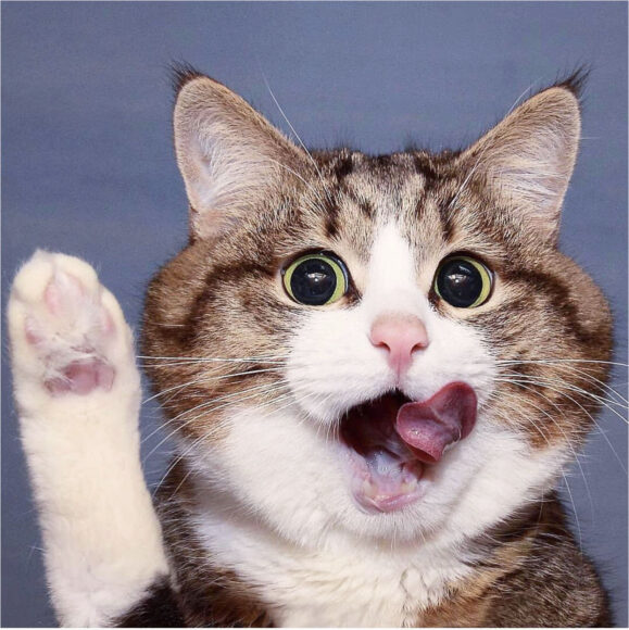 ảnh avatar hài con mèo xin chào