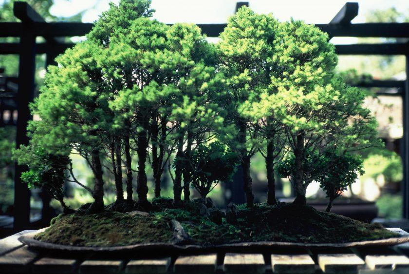 ảnh cây cảnh đẹp - cây cảnh tươi tốt xum xuê dưới nắng