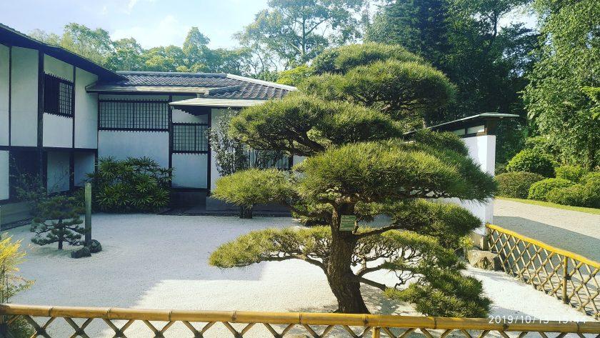 ảnh cây cảnh đẹp - cây xum xuê trong một khu vườn ở Nhật