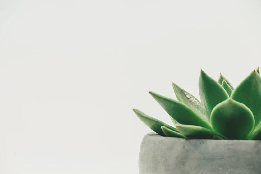 ảnh cây cảnh đẹp - một góc của chậu sen đá với nề trắng tinh tế