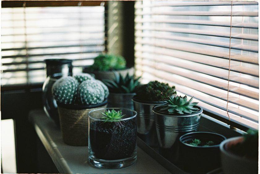 ảnh cây cảnh đẹp - những chậu cây xinh xắn được đặt ngay bậu cửa sổ