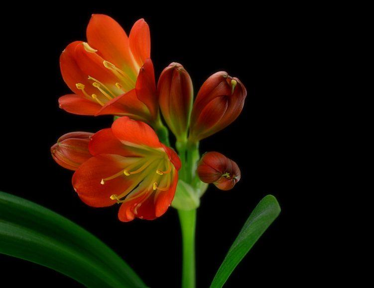 Ảnh đẹp hoa lan quân tử