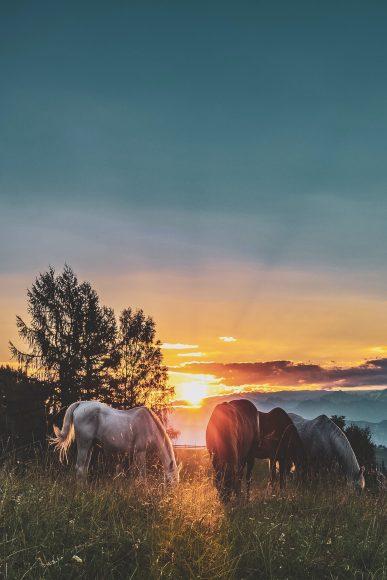 ảnh hoàng hôn buồn và những chú ngựa