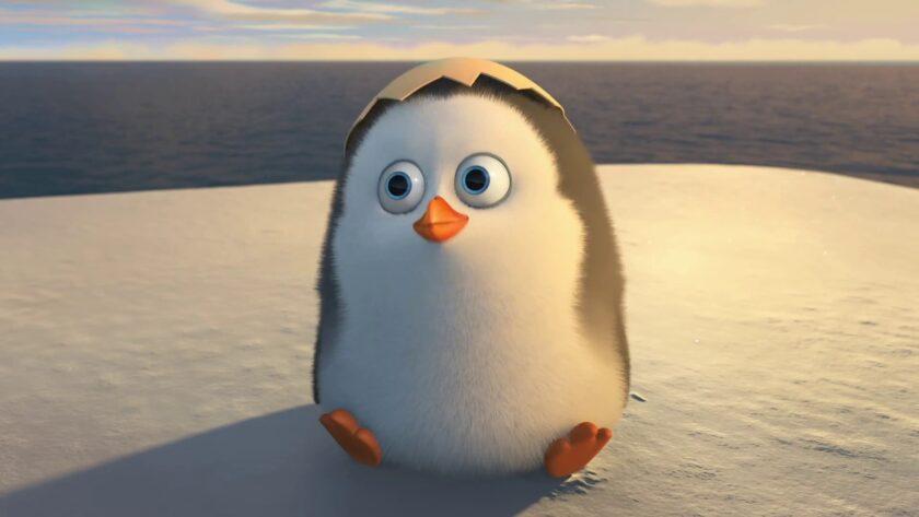 ảnh nền dễ thương về chim cánh cụt