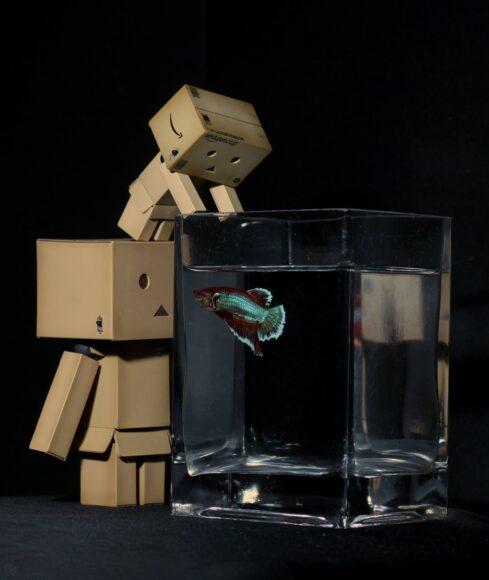 ảnh người gỗ và bể cá