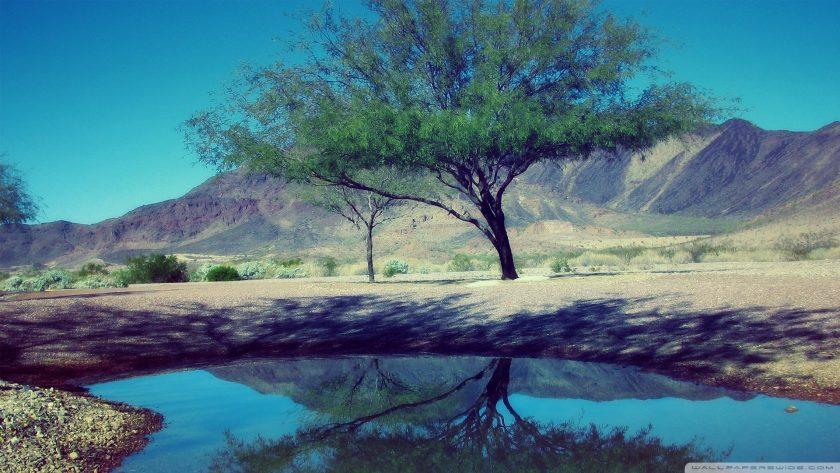 ảnh thiên nhiên buồn về cây cô đơn