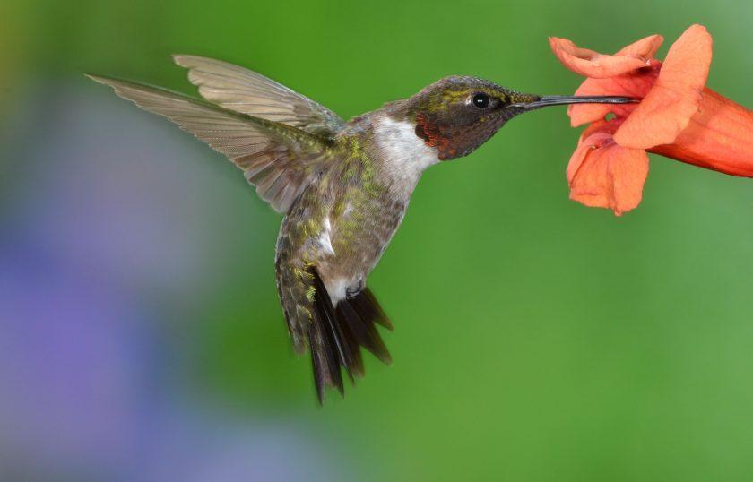 ảnh thiên nhiên buồn về chú chim hút mật