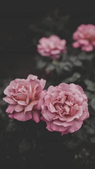 iphone wallpaper 4k flower Inspirational wallpaper iphone android Full HD Pinterest