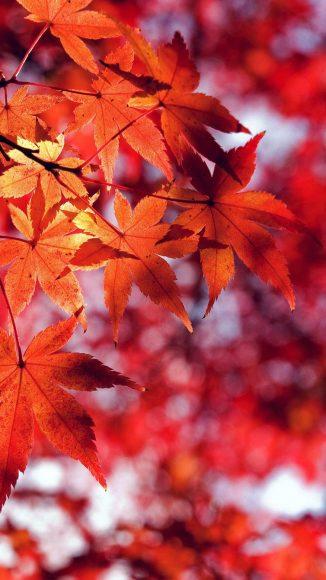 ảnh thiên nhiên buồn về rừng cây mùa thu