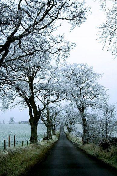 ảnh thiên nhiên buồn về rừng cây tuyết trắng