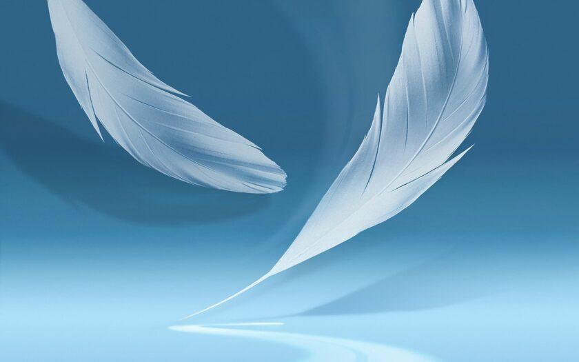 background xanh dương về lông vũ